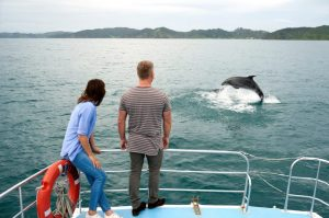 new zealand tours bay of islands dolphin watch paihia cruise north island tours self drive guided private tour guide