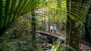 Rotorua Forest nature tours Auckland best travel route bookings tour guide operator private tour agency day multi-day trips new zealand holiday award-winning agency