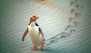 new zealand tours penguins dunedin holiday trip self drive tour newzealand
