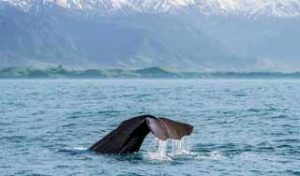 new zealand whales whale watching best new zealand self-drive tour guide luxury newzealand