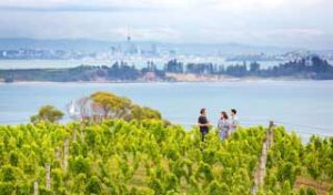 Auckland day trips Waiheke Island new zealand self drive tours wine food Dmc private tour guides