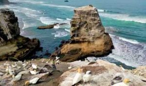 auckland trips holidays new zeland tours muriwai west coast private tour day trips auckland private transfer self drive tours new zealand