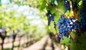 new zealand food and wine self drive tour luxury holidays new zealand wine tours