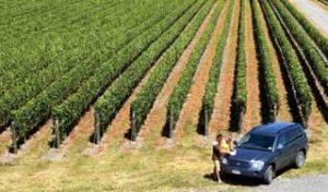 new zealand food and wine self drive tours luxury holidays honeymoon new zealand tour operator DMC