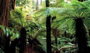 new zealand holidays Rotorua Whirinaki Rainforest nature walks self drive tours luxury guided tours