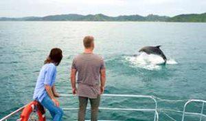 new zealand holidays bay of islands paihia self drive tour new zealand dolphin watch paihia honeymoon