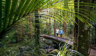 new zealand self drive tours hiking luxury food wine holidays inbound tour operator small groups