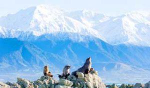 new zealand self drive tours kaikoura whales seals honeymoon holiday new zealand tours