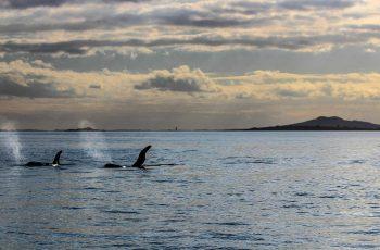 Auckland-Hafen-HaurakiGulf-Neuseeland-Orcas-Auckland-Wale-Delfine-Besichigung-AmericasCup-DMC2.jpg