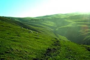 Catlins-dunedin-neuseeland-rundreise-mietwagen-urlaub-urlaub-greatdaysGD_320x240.jpg