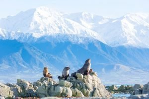 Kaikoura new zeland tours whale watching self drive activity tour holiday Auckland DMC