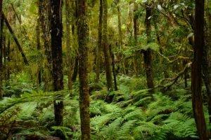 NZ_2004_07_RiwakaRiverSource012-e1556450834585.jpg
