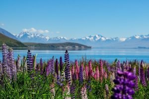 lake tekapo new zealand self drive tour holiday book newzealand luxury tours