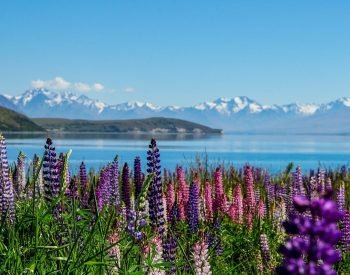 lake tekapo new zealand self drive tour holiday book newzealand luxury tours