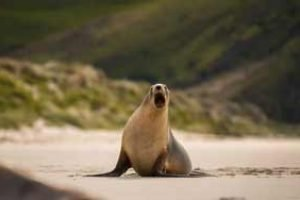 new zealand nature tours selas dunedin otage self drive tours shore excursion wildlife new zealand holidays